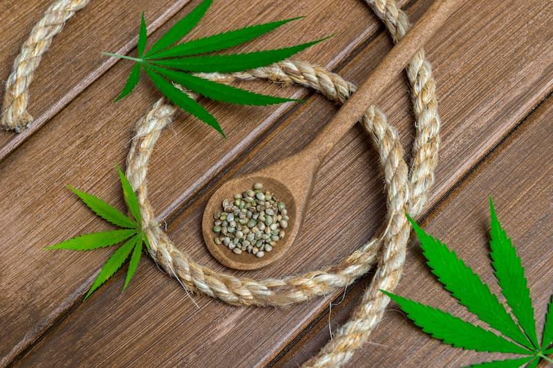 Hanfpflanzen sind ideal zur Herstellung von Seilen