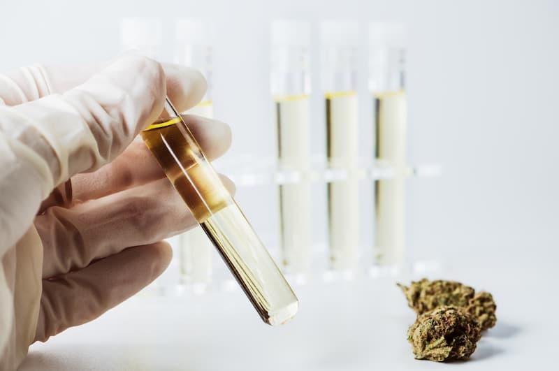 Neben CBD und THC sind in Hanfprodukten weitere Inhaltsstoffe enthalten